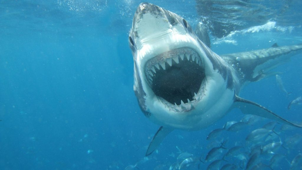 fishes-white-sea-great-shark-jaws-photos-wallpapers-x-PIC-MCH064008-1024x576 Jaws 1975 Wallpaper 24+