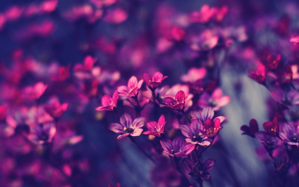 flower-background-tumblr-x-for-xiaomi-PIC-MCH03556-1024x640 Wallpaper Tumblr Laptop 45+