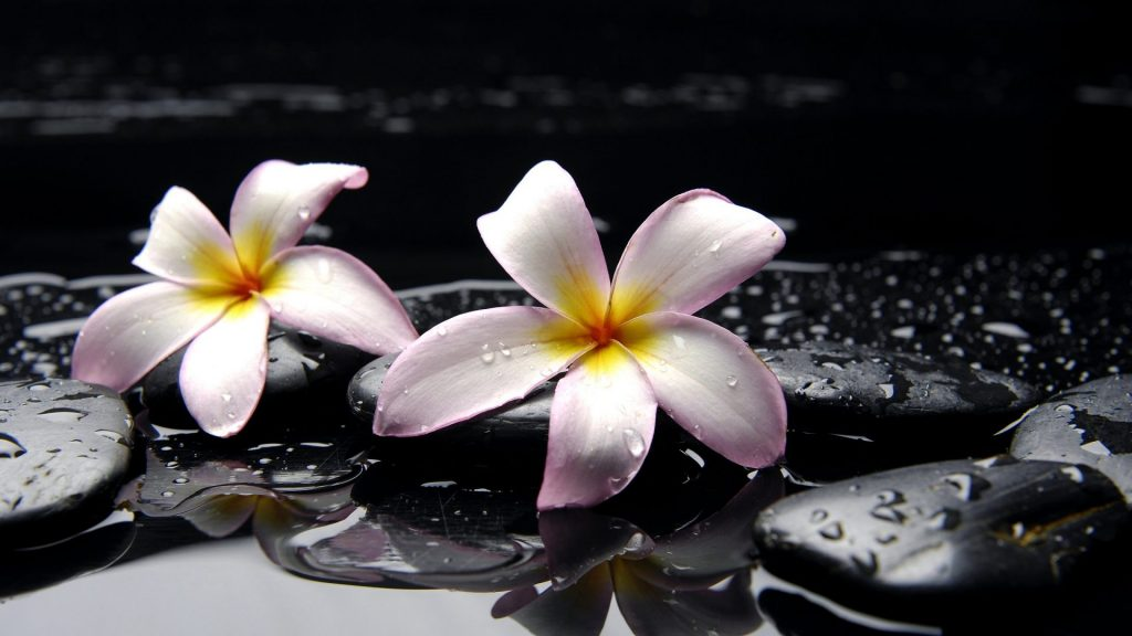 flowers-photography-lovely-spa-drops-beautiful-water-pretty-drop-reflection-sweet-beauty-plumeria-n-PIC-MCH064393-1024x576 Hd Spa Wallpapers 1920x1080 36+