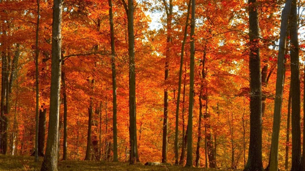 forest-fall-autumn-grass-tall-trees-tree-daytime-orange-leaves-yellow-red-wallpaper-mac-x-PIC-MCH064733-1024x576 Hd Fall Wallpapers For Mac 35+