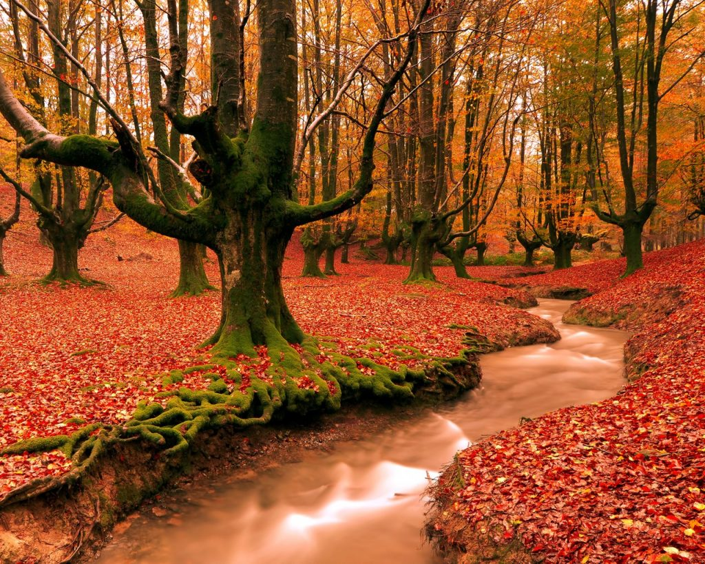 forests-autumn-forest-colors-creek-nature-wallpaper-download-for-mobile-PIC-MCH064760-1024x819 Hd Autumn Wallpapers For Mobile 32+