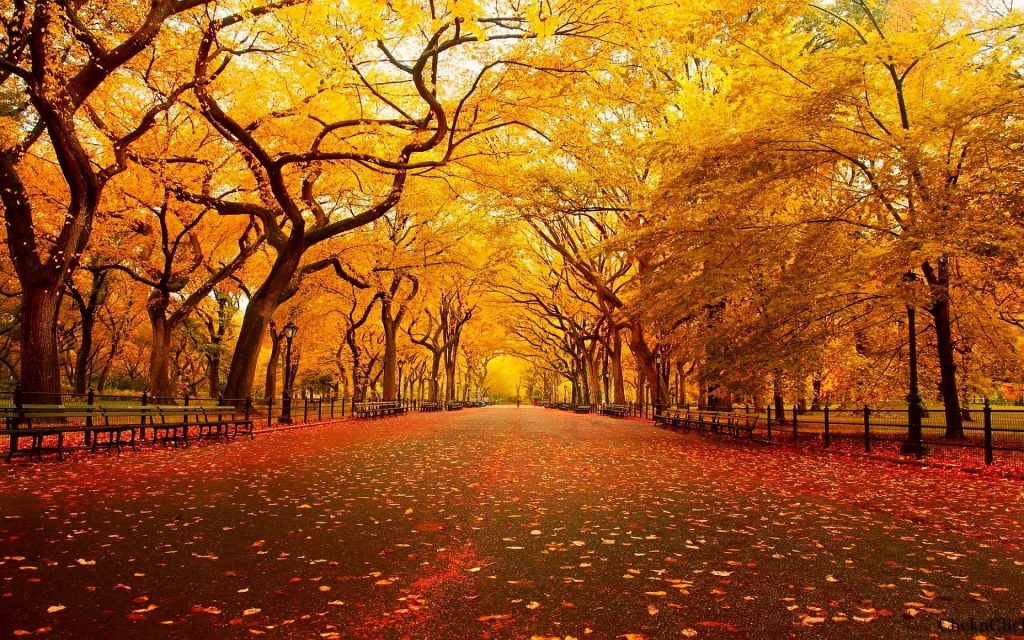 free-autumn-wallpaper-x-mobile-PIC-MCH012865-1024x640 Hd Autumn Wallpapers For Mobile 32+