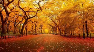Hd Autumn Wallpapers For Mobile 32+