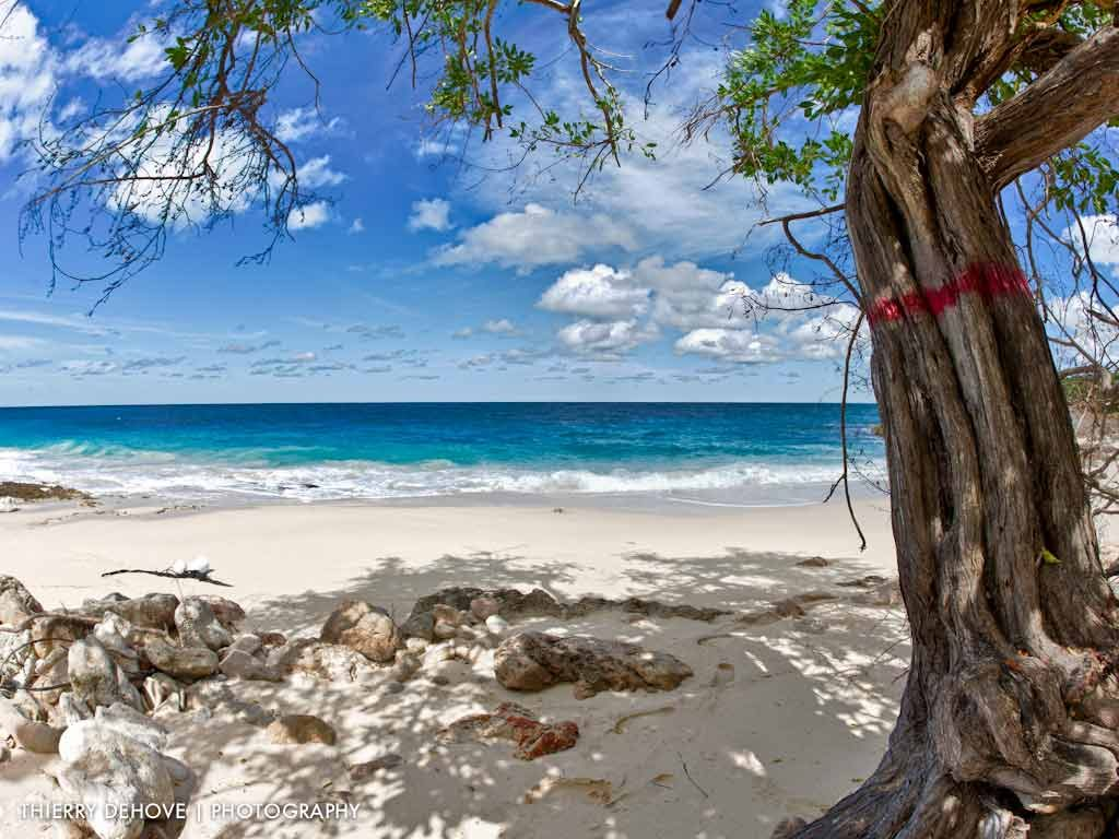 free-tropical-beach-wallpaper-PIC-MCH065735-1024x768 Paradise Wallpapers Free 38+