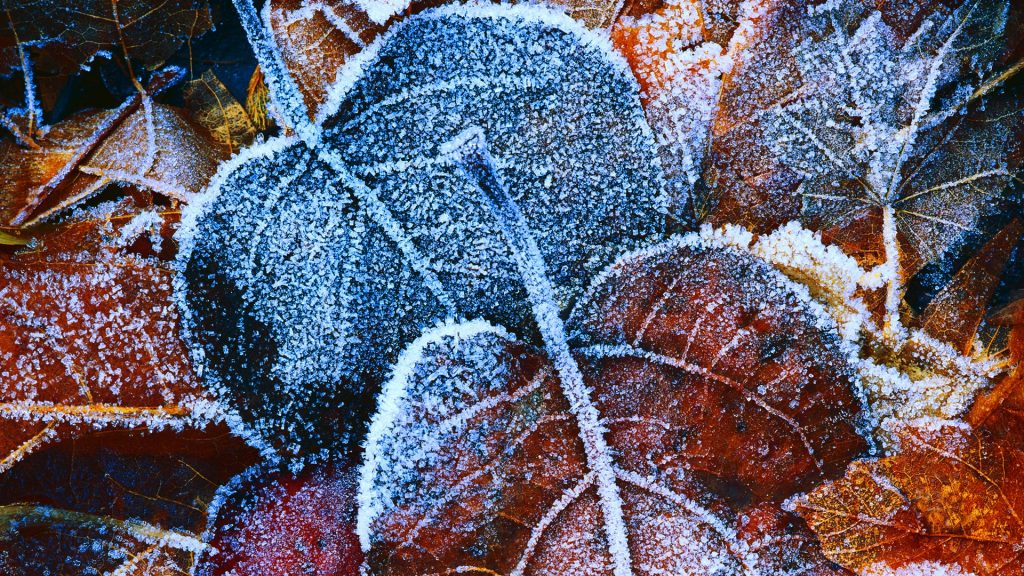 frosty-autumn-leaves-x-PIC-MCH066246-1024x576 Hd Autumn Wallpapers For Mobile 32+