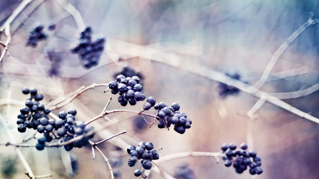 fruits-berries-depth-field-branches-green-nature-wallpaper-widescreen-x-PIC-MCH066345-1024x576 Cpm Hd Wallpaper 27+