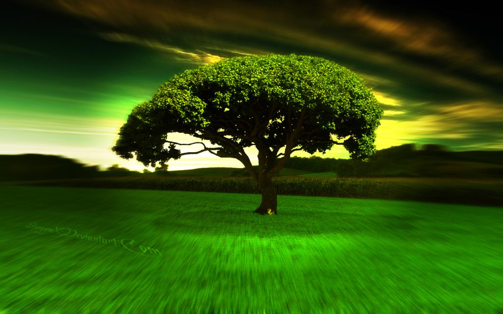 hypno-tree-hd-widescreen-wallpapers-x-PIC-MCH074443-1024x640 1080p Hd Full Widescreen Wallpapers 49+
