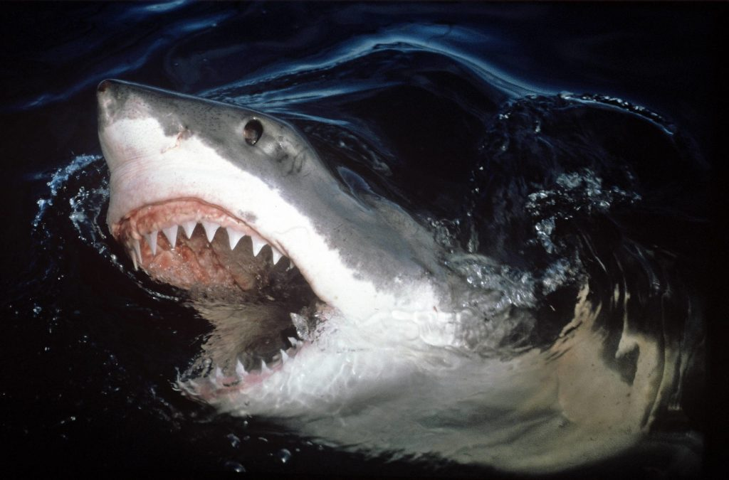 jaws-wallpaper-x-for-retina-PIC-MCH02400-1024x675 Jaws Wallpaper Android 25+