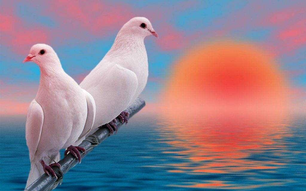 love-birds-images-PIC-MCH018343-1024x640 Free Love Wallpapers Gallery 32+
