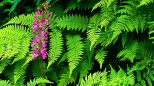 Fern Wallpaper Green 17+