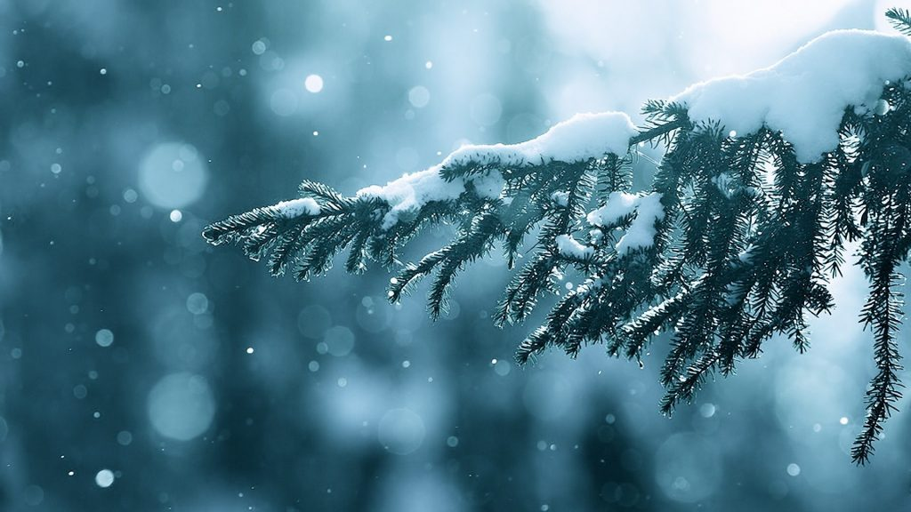 nature-branches-bokeh-trees-season-field-depth-flare-snow-lens-winter-wallpaper-hd-scene-x-PIC-MCH088976-1024x576 Winter Wallpapers Hd 1920x1080 40+