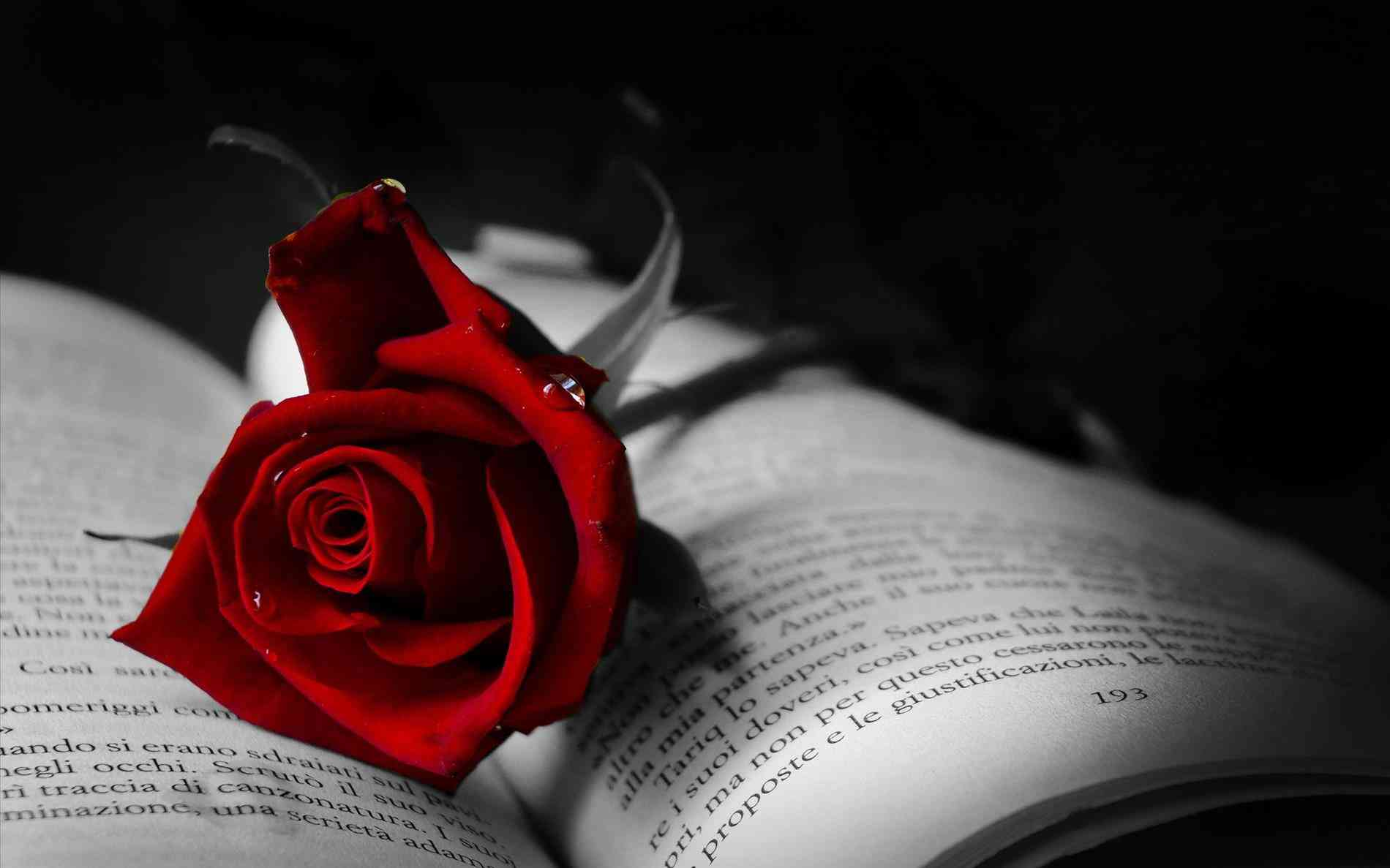 Red Gothic Red Roses Wallpaper And Black Rose Wallpapers Photo