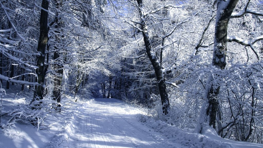 road-snow-frost-forest-winter-PIC-MCH099093-1024x576 Winter Wallpapers Hd 1920x1080 40+