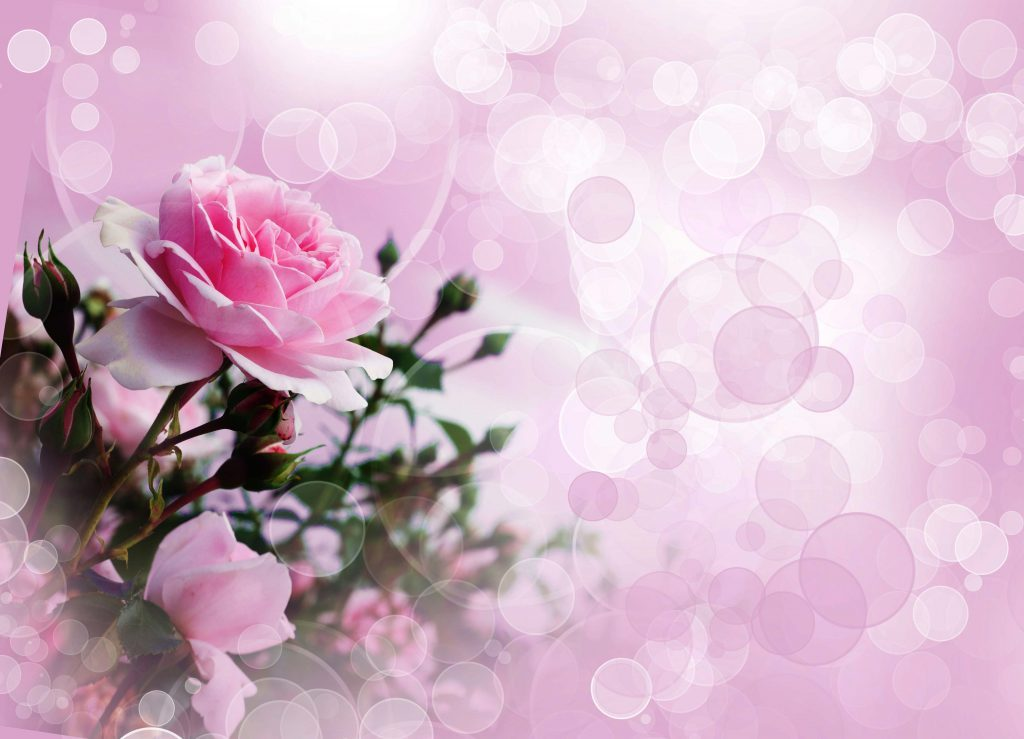rose-wallpaper-pink-k-ultra-hd-and-background-x-id-border-blue-for-desktop-red-free-PIC-MCH099395-1024x739 Wallpaper Rose Image 25+