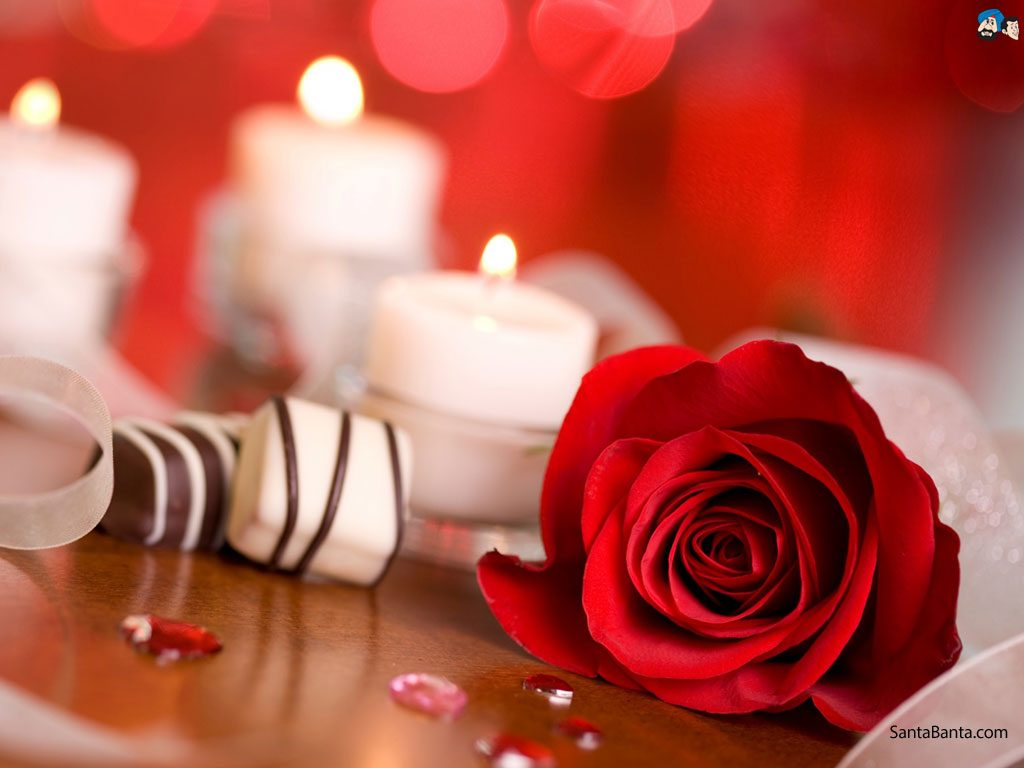 roses-a-PIC-MCH099407-1024x768 Wallpaper Rose Red 36+