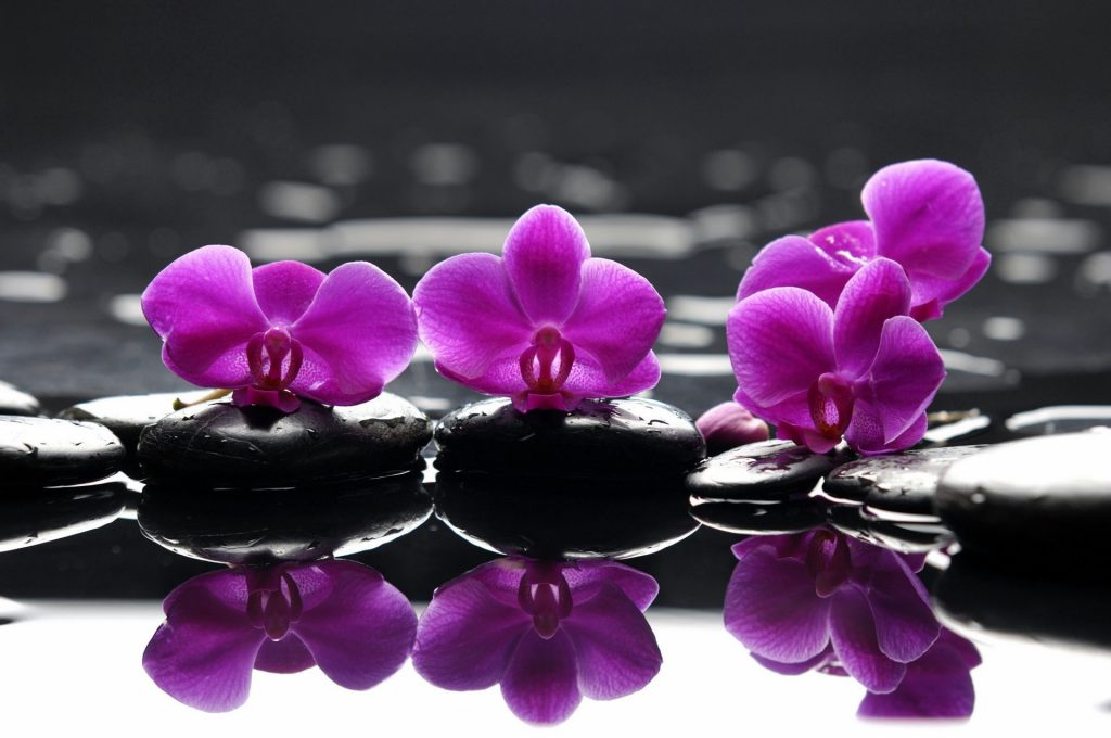 spa-purple-flowers-spa-stones-purple-flower-droplets-reflection-PIC-MCH0103077-1024x680 Spa Flowers Wallpapers 22+