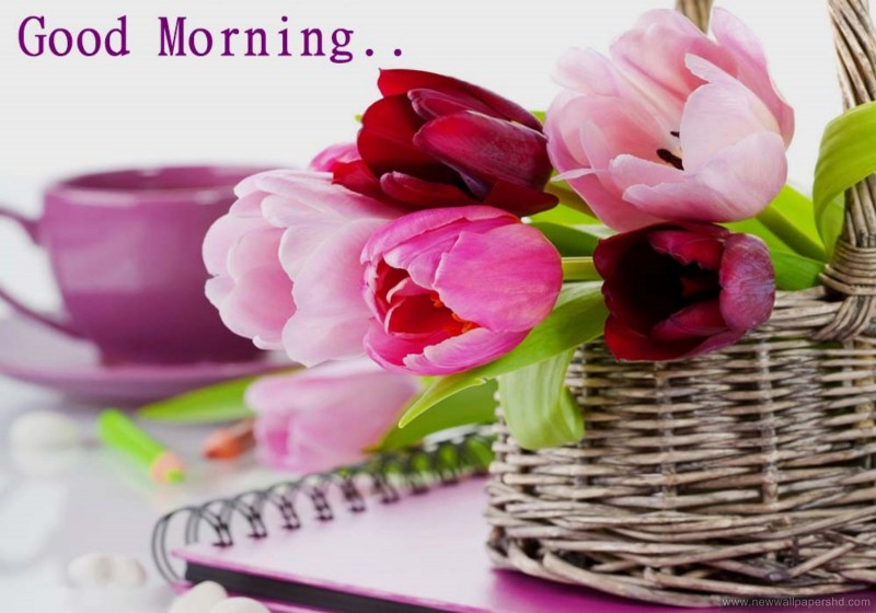 stylish-lovely-tulips-good-morning-love-imagess-x-PIC-MCH0104490 Spa Mage Hd Wallpapers 21+