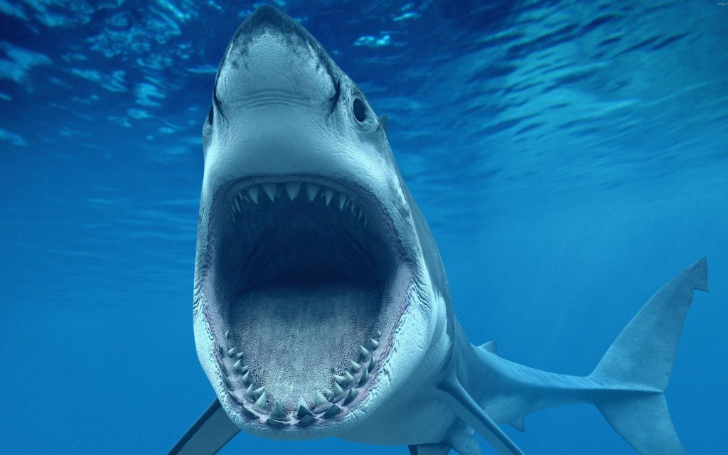 the-great-white-shark-jaws-ultra-hd-wallpaper-x-PIC-MCH0106624-1024x640 Jaws Wallpaper Android 25+