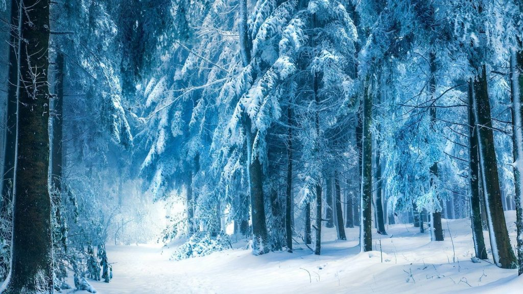 top-snow-forest-wallpaper-x-for-meizu-PIC-MCH022587-1024x576 Wallpaper Snowfall 40+