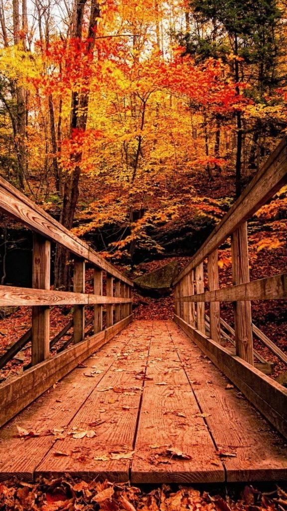 wood-bridge-in-autumn-wallpaper-background-PIC-MCH0117298-576x1024 Hd Fall Wallpapers Iphone 31+