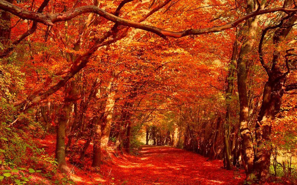 wp-image-autumn-wallpapers-PIC-MCH0117559-1024x640 Hd Autumn Wallpapers For Mobile 32+