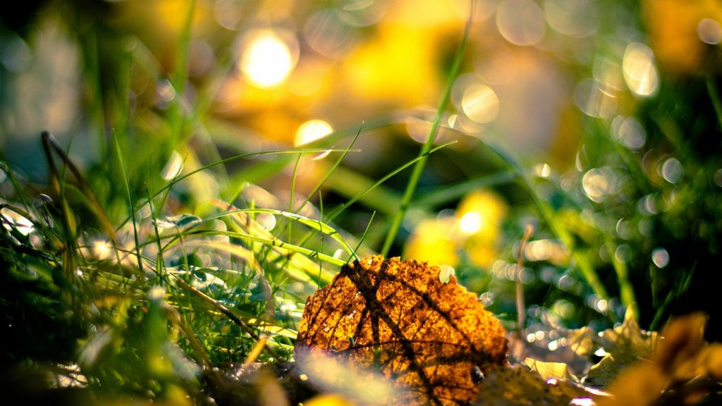 Autumn-fresh-season-p-hd-pictures-nature-PIC-MCH042312-1024x576 Super Hd Wallpapers 1920x1080 48+