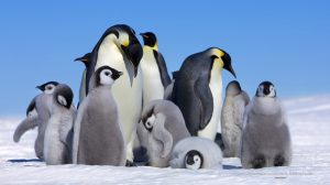 Penguin Wallpapers Hd 31+