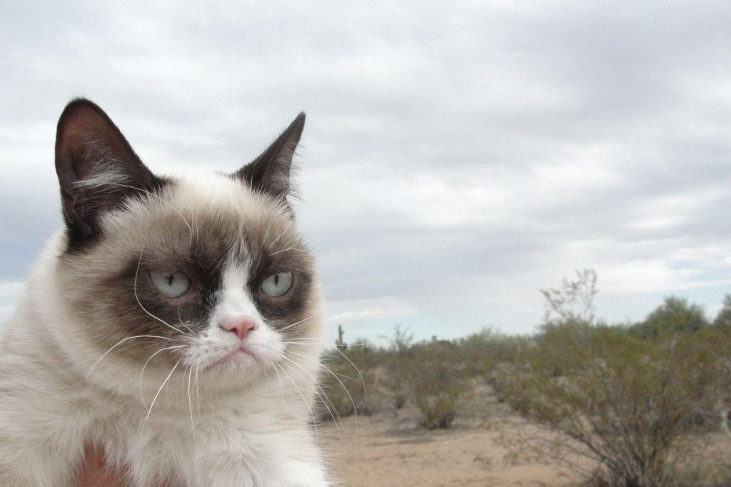 DqfOphk-PIC-MCH060586-1024x682 Grumpy Cat Iphone Wallpapers 22+