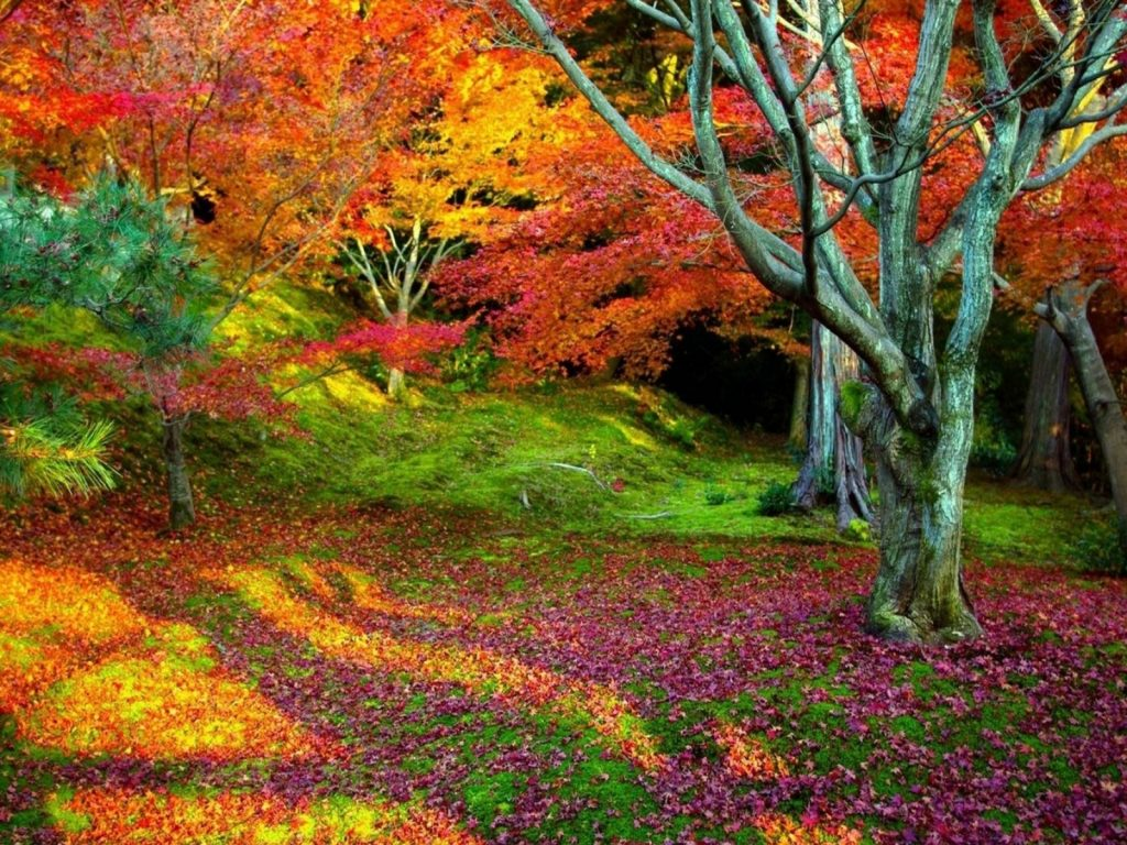 Fall-nature-backgrounds-hd-wallpapers-x-PIC-MCH062979-1024x768 Super Hd Wallpapers Nature 34+