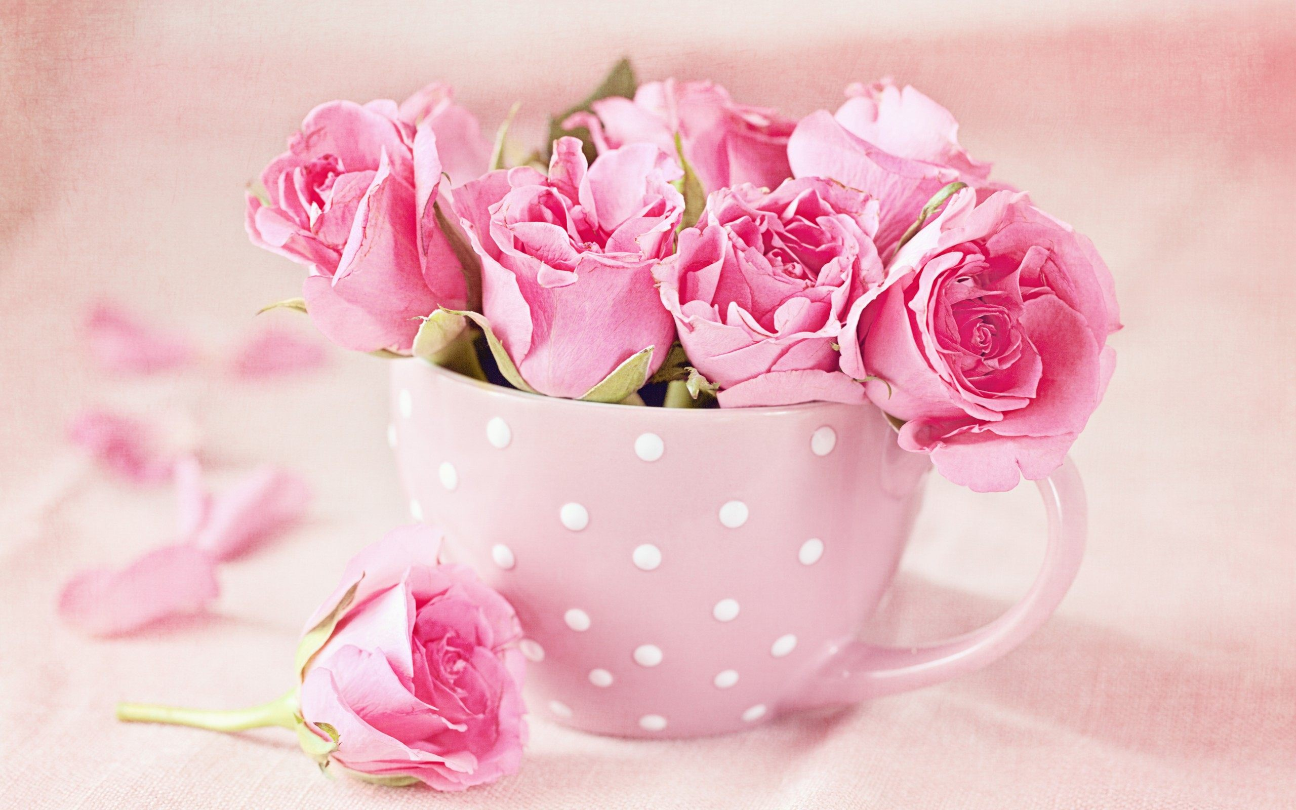 Flower Cup Pink Roses Wallpaper Rose Full Hd For Iphone Pic