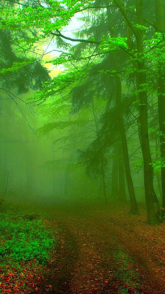 Green-Forest-Road-iPhone-Wallpaper-PIC-MCH069699-576x1024 Hd Green Wallpapers For Iphone 6 42+