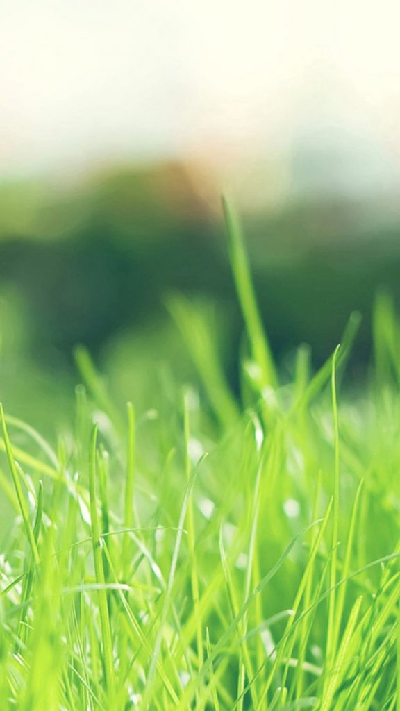 Green-Grass-iPhone-Wallpapers-PIC-MCH069700-576x1024 Hd Green Wallpapers For Iphone 6 42+
