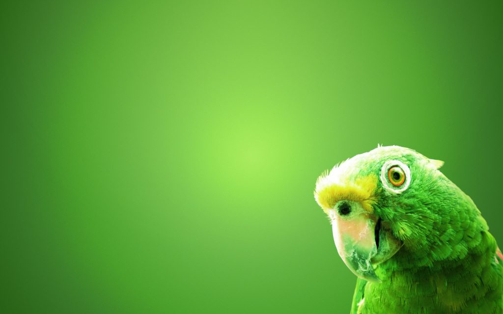 Green-Parrots-Bird-Wallpaper-HD-Backgrounds-download-k-high-definition-amazing-tablet-mac-desktop-PIC-MCH069949-1024x640 Hd Green Wallpapers For Pc 32+