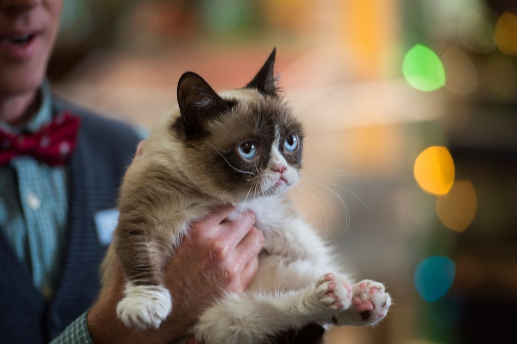 Grumpy-Cat-Wallpaper-Great-Collection-WC-PIC-MCH070161-