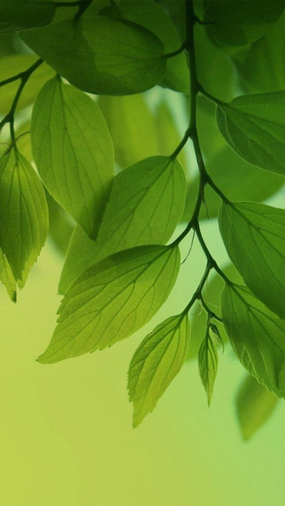 HD-Green-Leaves-Tree-Android-Wallpaper-PIC-MCH071519-576x1024 Hd Green Wallpaper For Android 26+