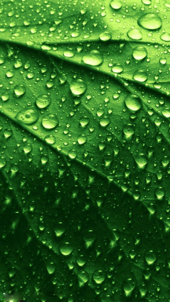 HD-green-leaves-and-water-drops-iphone-plus-wallpaper-PIC-MCH071517-576x1024 Hd Green Wallpapers For Iphone 6 42+