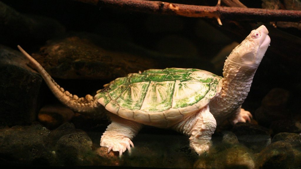 Interesting-Turtle-Wallpaper-PIC-MCH075750-1024x576 Baby Turtle Wallpapers 32+