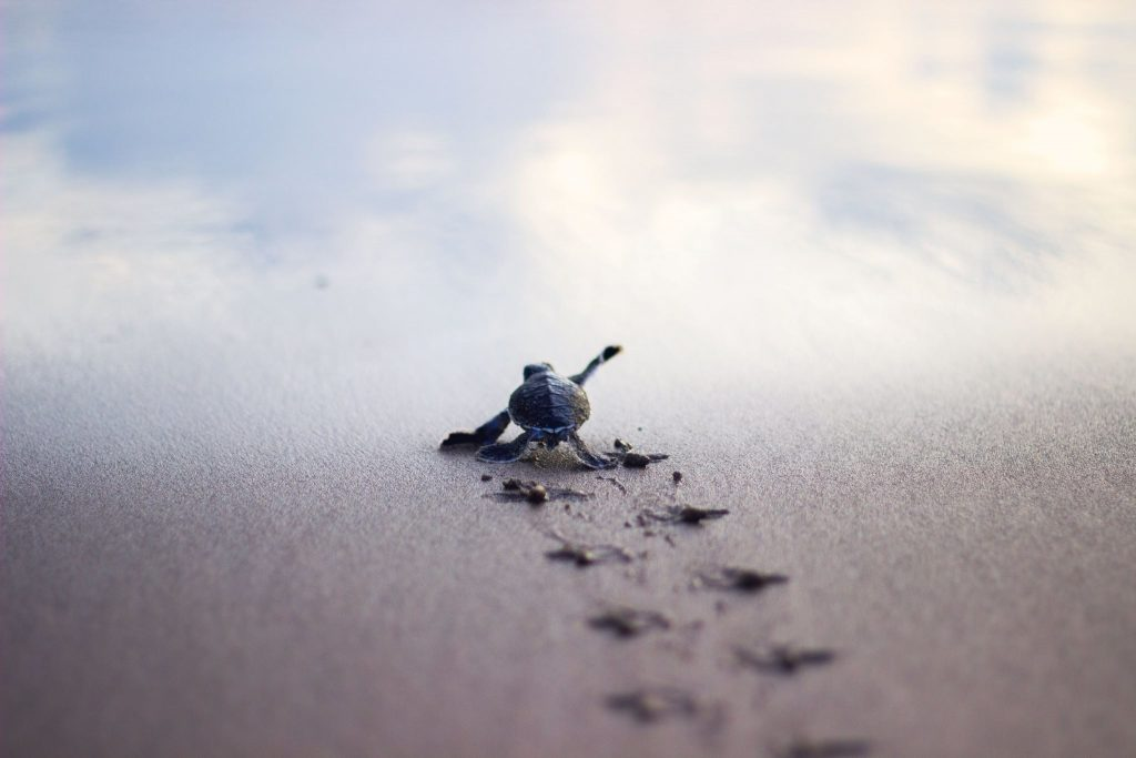 PIC-MCH015919-1024x683 Baby Turtle Wallpapers 32+