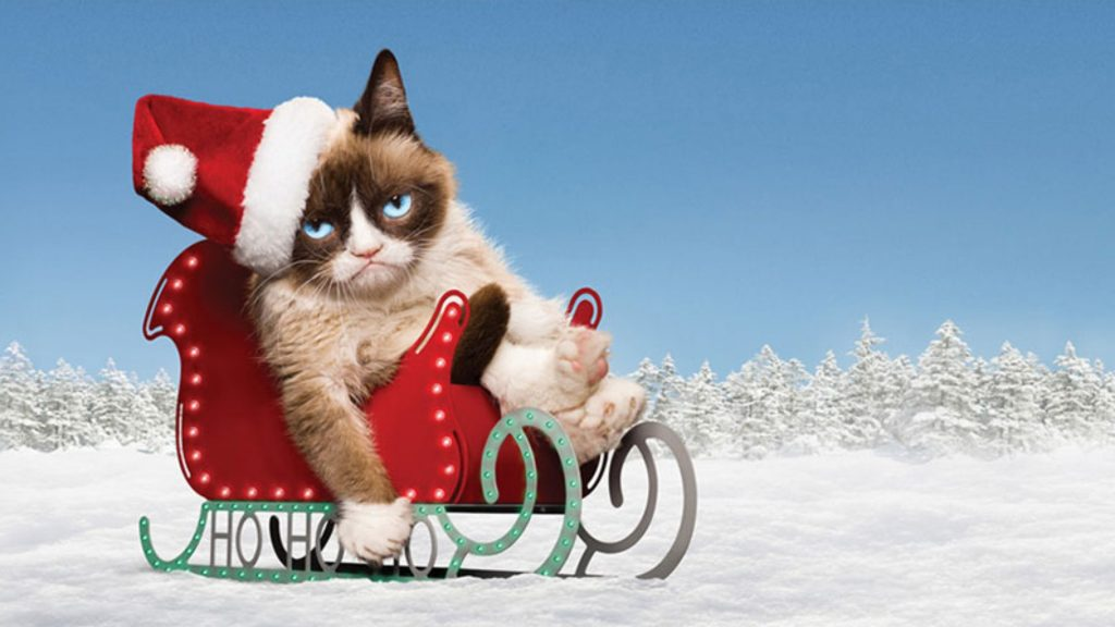 PIC-MCH016751-1024x576 Cute Grumpy Cat Wallpapers 41+