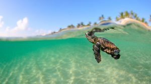 Baby Turtle Wallpapers 32+