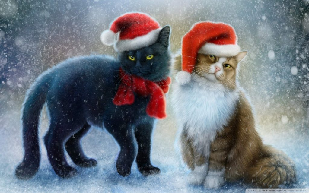 PIC-MCH06155-1024x640 Grumpy Cat Christmas Wallpapers 21+