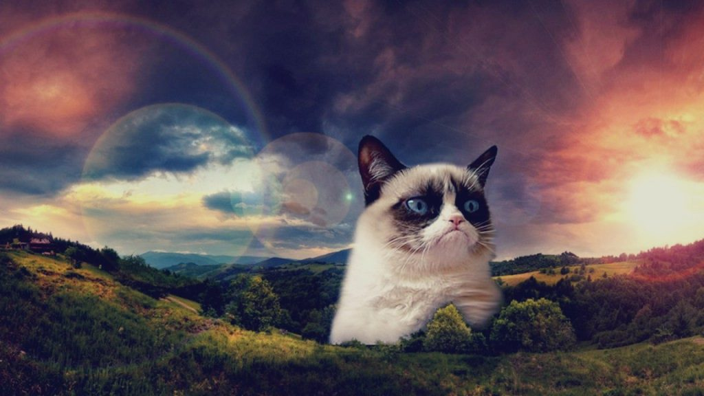 PIC-MCH06630-1024x576 Cute Grumpy Cat Wallpapers 41+