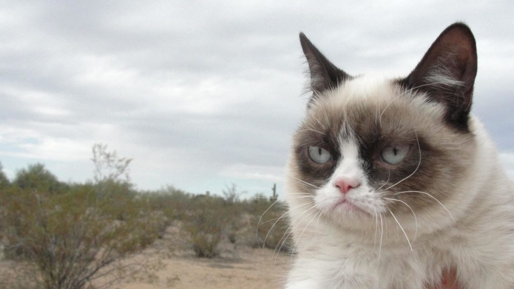 PIC-MCH06638-1024x576 Cute Grumpy Cat Wallpapers 41+