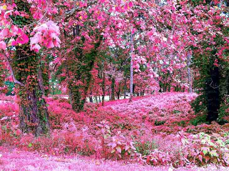 PINK-GARDEN-Wallpaper-PIC-MCH095431 Wallpapers Pink Colour 42+