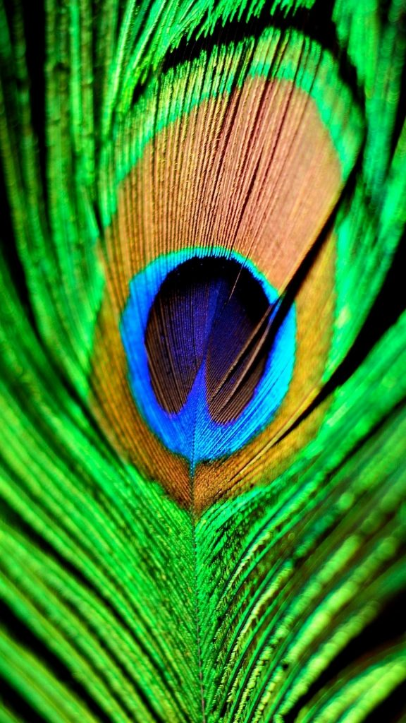 Peacock-Feather-Green-Blue-iPhone-Plus-HD-Wallpaper-PIC-MCH094212-576x1024 Hd Green Wallpapers For Iphone 6 42+
