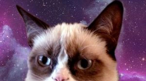 Grumpy Cat Phone Wallpapers 23+