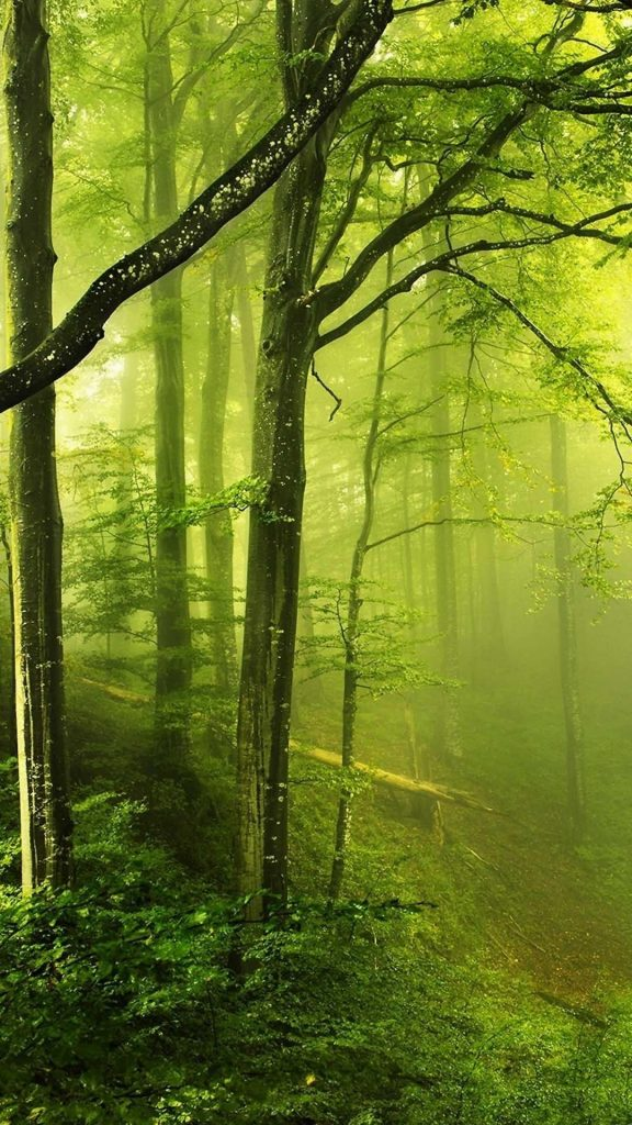 TAP-AND-GET-THE-FREE-APP-Nature-Unicolor-Forest-Fog-Amazing-Awesome-Green-Shiming-HD-iPhone-Wal-wal-PIC-MCH0105662-576x1024 Hd Green Wallpaper For Android 26+