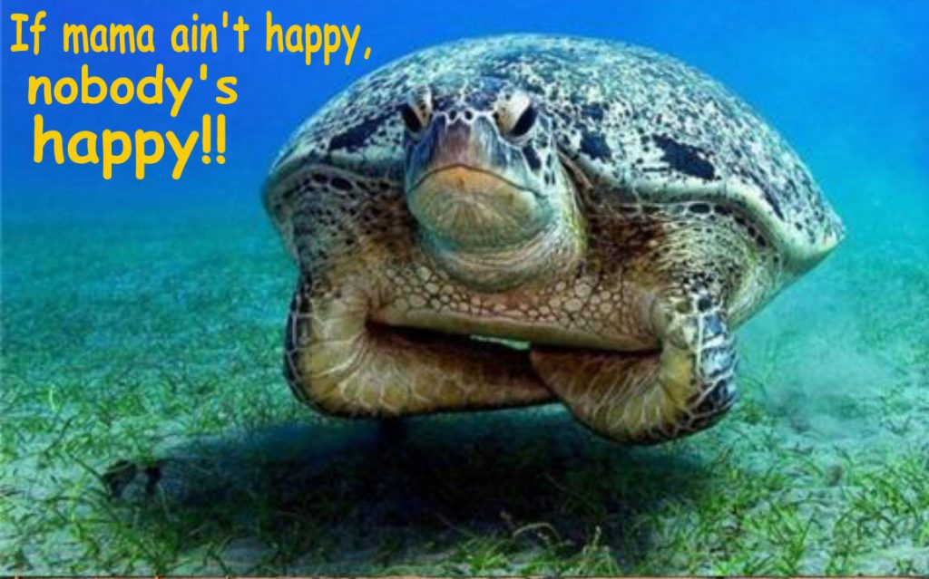 Turtle-Humor-Wallpapers-PIC-MCH0108503-1024x639 Awesome Turtle Wallpapers 32+