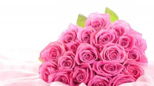 Wallpapers Pink Roses 36+