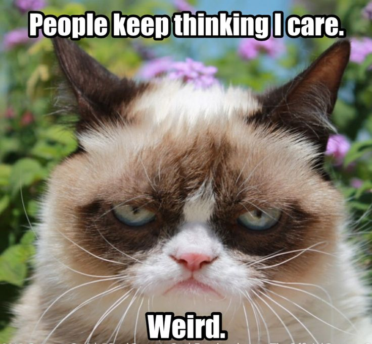 aeaafeeffcced-PIC-MCH039076 Grumpy Cat Meme Wallpapers 34+